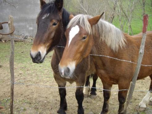 TVA ou pas, ce sont les chevaux qui paient la facture