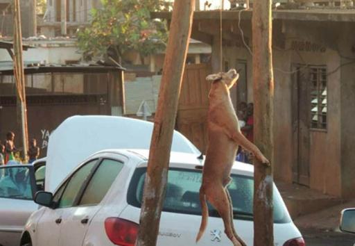 Pétition pour les chiens de Mayotte