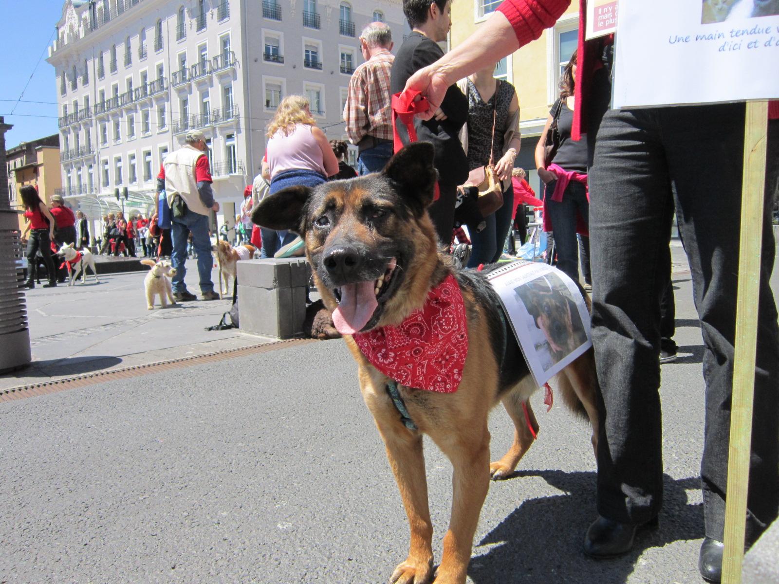 A propos des chiens martyrs de Roumanie, et des autres…