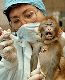 Expérimentation animale : la grande supercherie