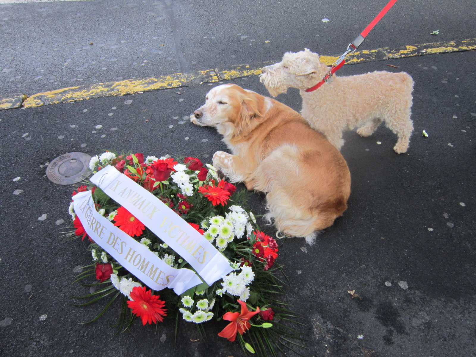 Hommage «aux animaux victimes des guerres des hommes»