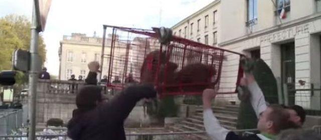 Ragondins de Nantes : les «nuisibles» tombent le masque…