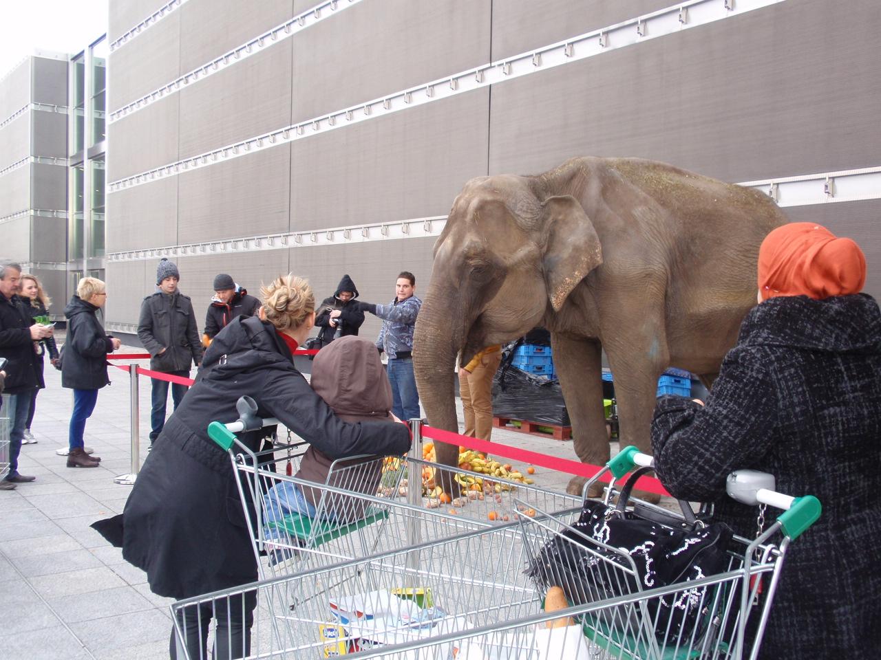 De la piste des géants à la piste aux esclaves : les éléphants