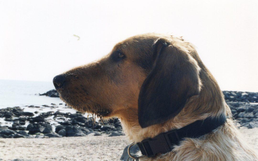 La Griffure cynophile for ever : «Je suis un chien !»