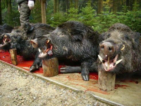 Pires que les chasseurs : ceux qui leur facilitent le boulot