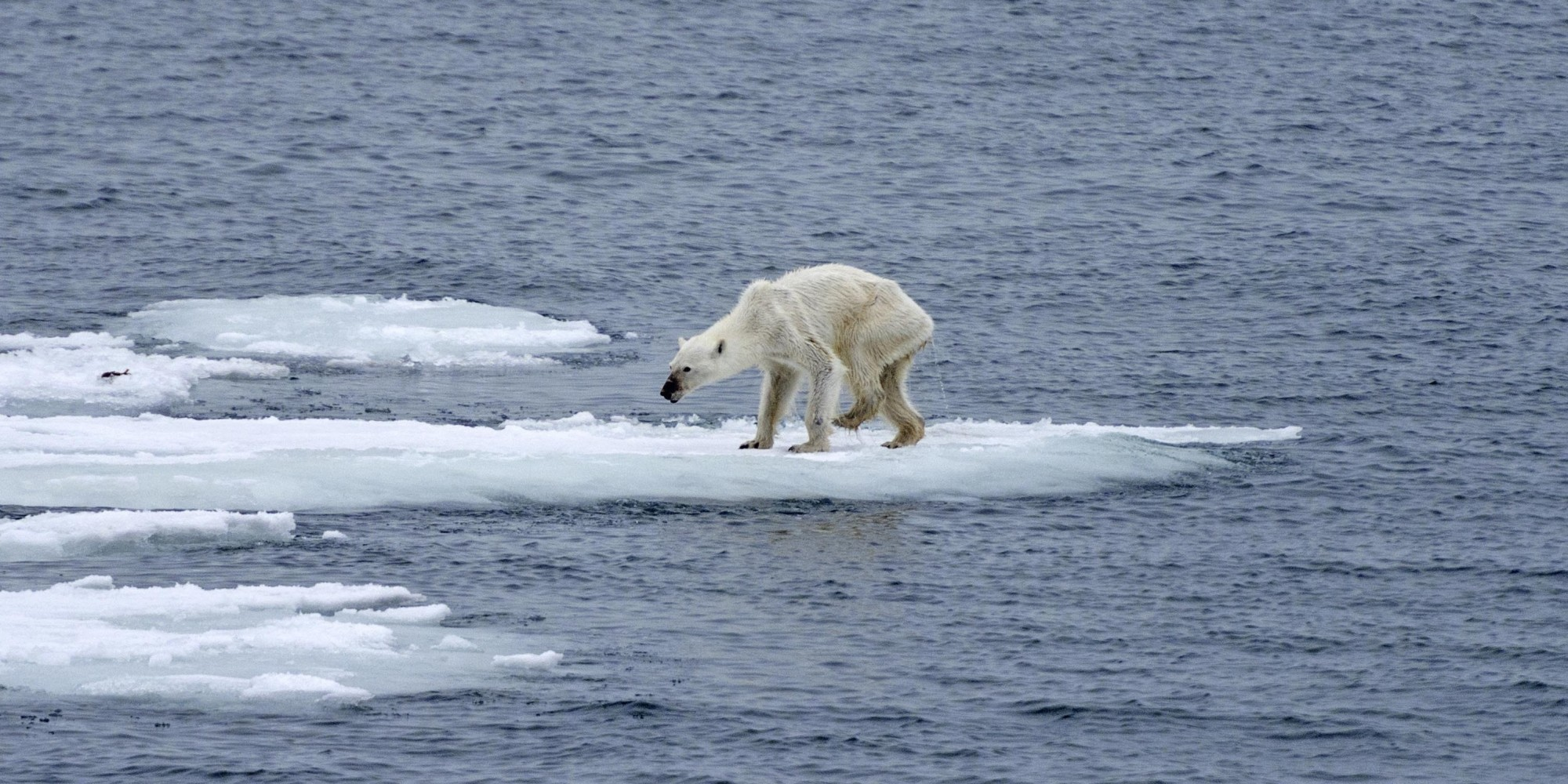 Initiatives citoyennes et COP21 : et si on s'animalternativait ?