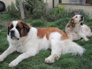 Lulu et Loukoum