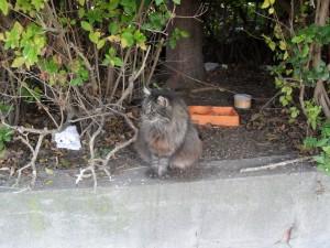Les chats libres sont très mal vus par les municipalités...