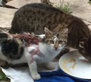 Bagnolet : des chats brûlés par projection d'acide.