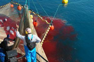 La pêche industrielle : un carnage dénoncé par Philippe Boucheix.