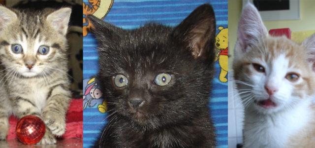 Adoptez un chaton de La Griffe…