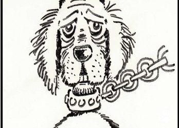 Détention des animaux : une loi frappée d'obsolescence